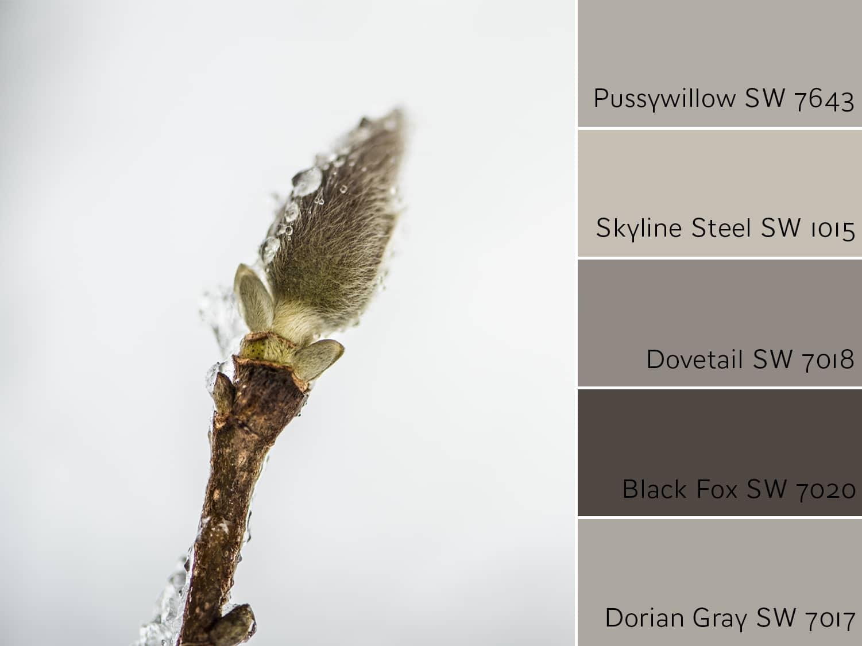 Pussywillow SW 7643 Monochromatic color scheme