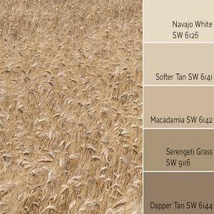 Navajo White Monochromatic Color Scheme
