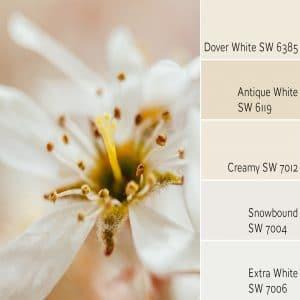 Dover White SW 6385 monochromatic color scheme