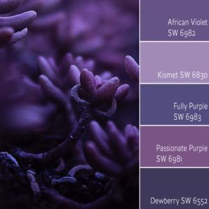 African Violet Monochromatic Color Scheme