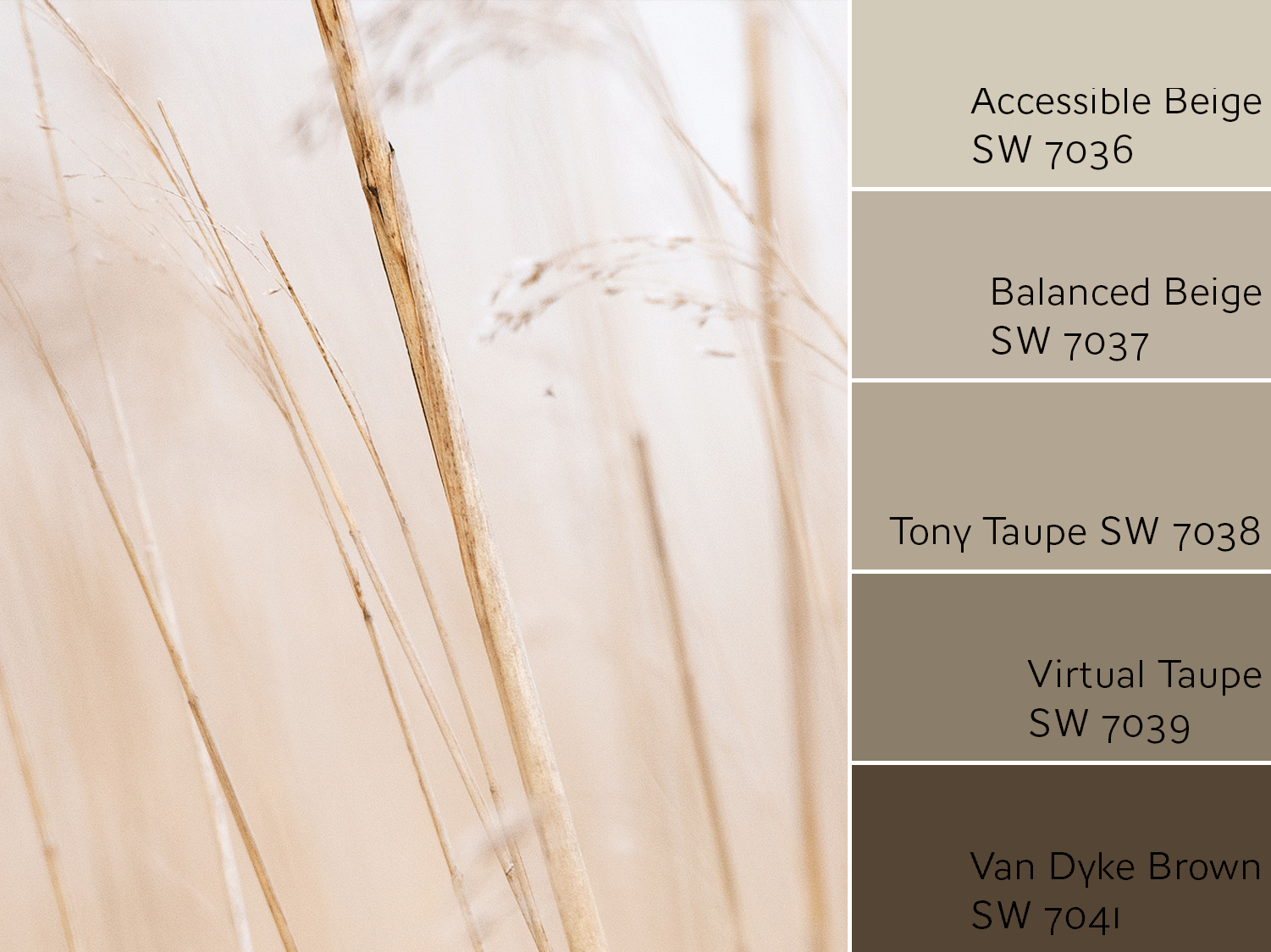 Accessible Beige Color Review by Laura Rugh
