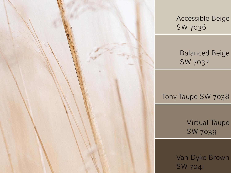 Accessible Beige Monochromatic Color Scheme - Accessible Beige Color Review